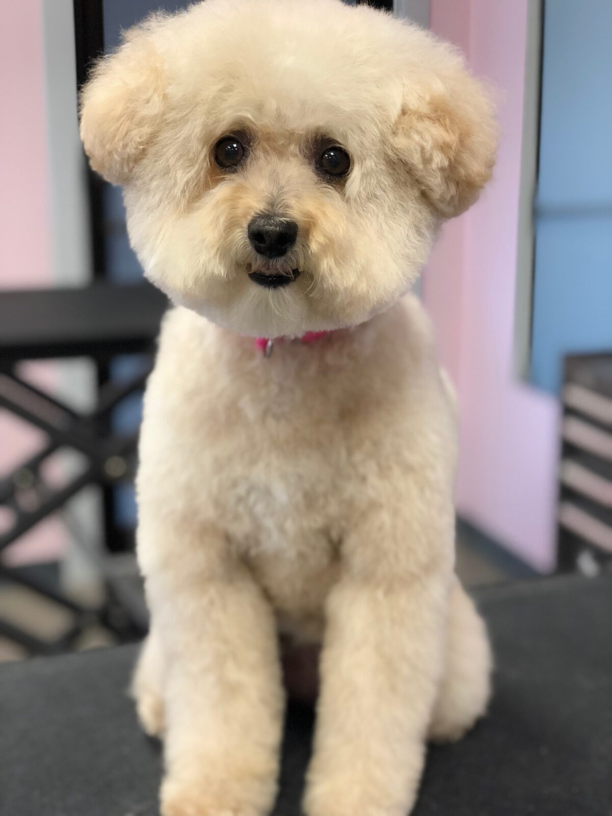 Dog Groomers in Crown Point Indiana