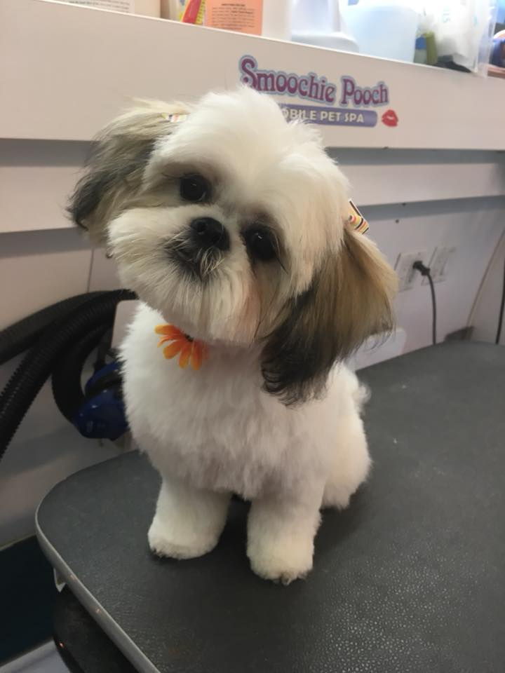 Smoochie Pooch is the best puppy groomers around crown point area
