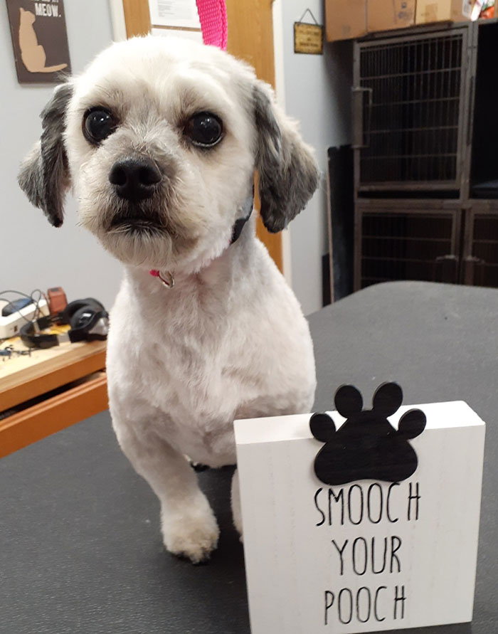 Mobile Dog Grooming in Portage