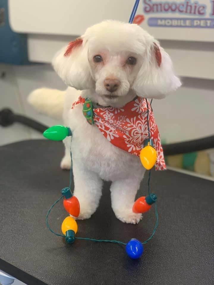 Get your dog pampered at the nearest pampered pet salon in Marion