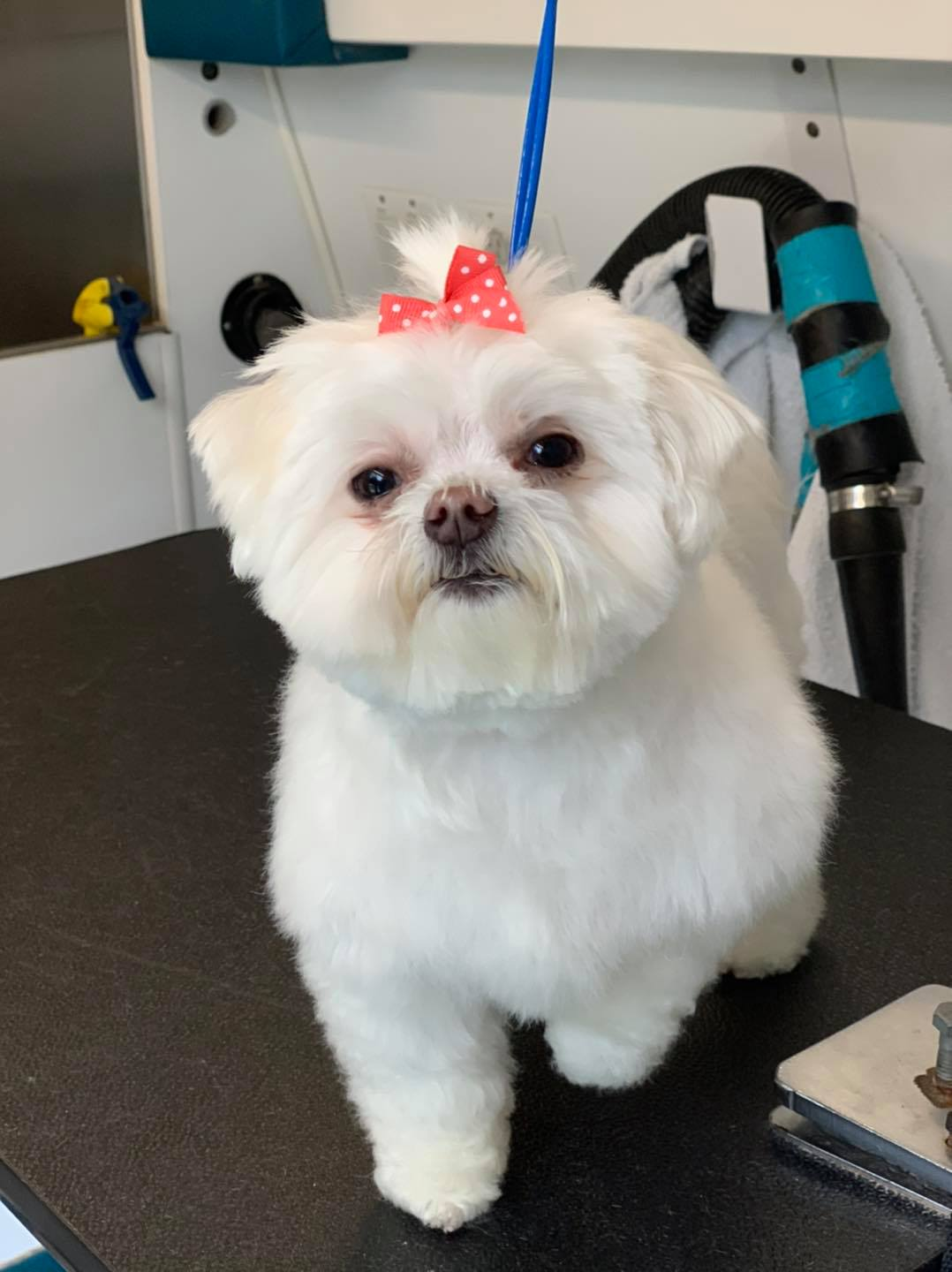 Local mobile dog groomers in New Haven, IN