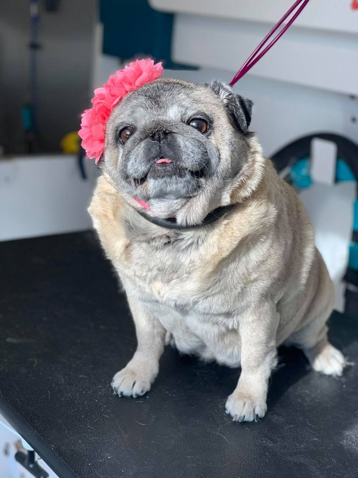Find Professional Pet Grooming Services in Valparaiso for your Cute Dog