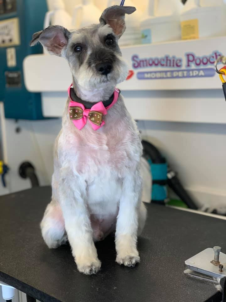 Smoochie Pooch – Best Dog Grooming Center in Valparaiso