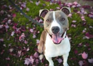 5 Ways to Encourage Positive Behavior in Your Dog