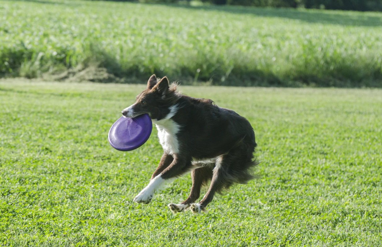 Fun Games to Play with your Dog This Summer