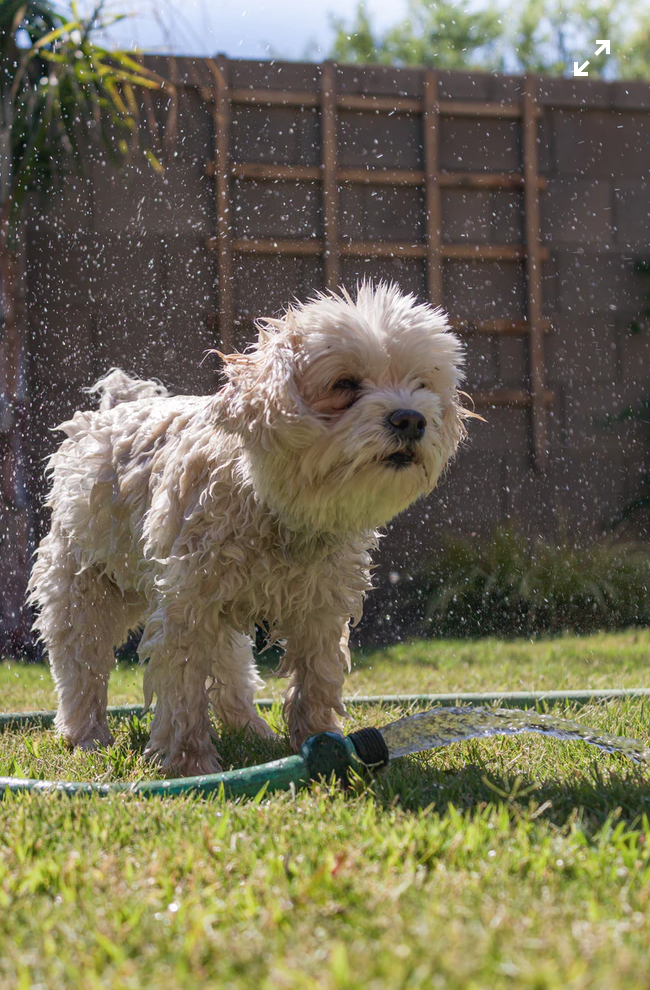 Tips to Keep Your Dog Cool in the Summer